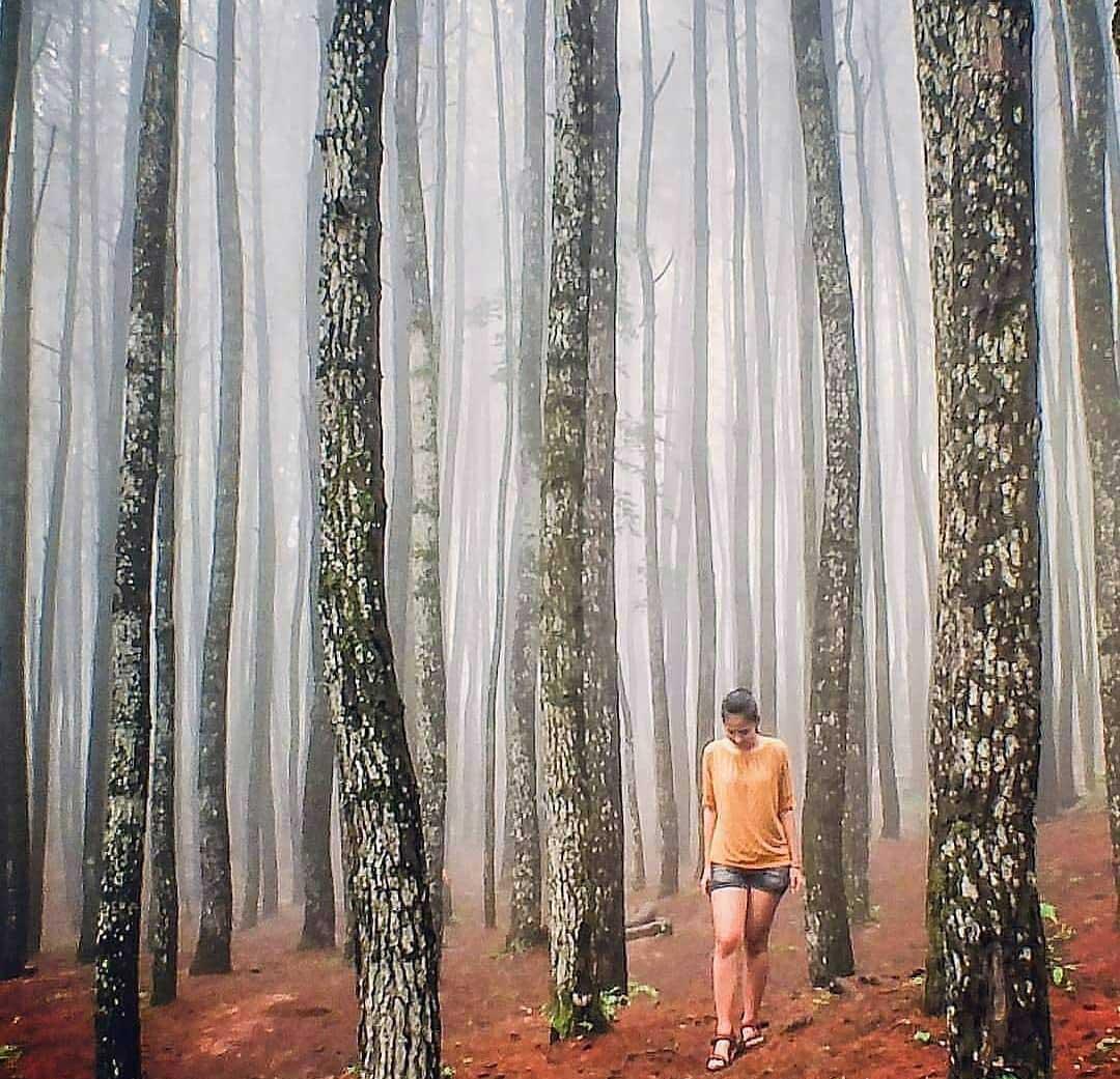 Hutan Pinus Diingo Outbound di Yogyakarta